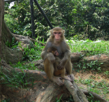 Monkey Hill (video!)