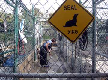 Seal crossing