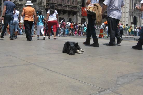 Perrito de Plaza de Armas