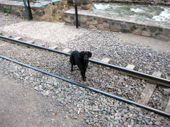 Hi, Mr. Black Dog. Don't stay on those tracks too long.