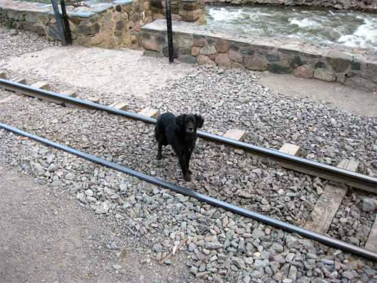 Hi, Mr. Black Dog. Don't stay on those tracks too long.